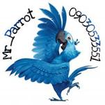 پرندگان زینتی آقای طوطی