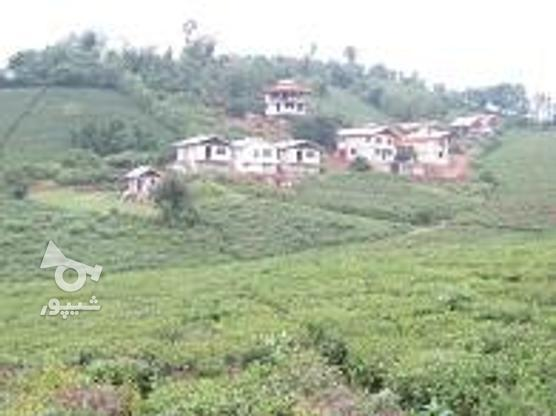 300 متر زمین مسکونی در گروه خرید و فروش املاک در گیلان در شیپور-عکس1