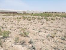 زمین کشاورزی 5000 متری در ورامین (جواد آباد)  در شیپور-عکس کوچک