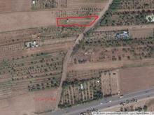 باغ میوه كورانه 1387 متری  در شیپور-عکس کوچک