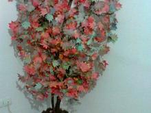 درخت پاییزی  در شیپور-عکس کوچک