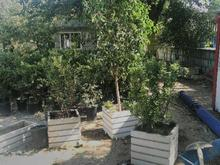 طراحی .کاشت .نگهداری فضای سبز در شیپور-عکس کوچک