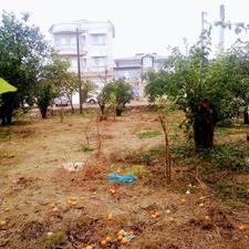 482متر زمین رامسر  در شیپور-عکس کوچک