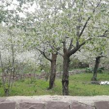 720 متر زمین اکازیون در شیپور-عکس کوچک