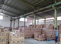 کارخانه3000 متر  در شیپور-عکس کوچک