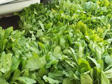پخش سبزی محبی:خوردنی.خورشتی.آشی.قورمه ای.خشک کردنی در شیپور-عکس کوچک