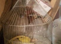 قفس طرقه توافقی با لوازمفوری در شیپور-عکس کوچک