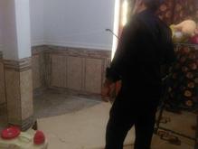 سم پاشی و موریانه زدایی شرکت برادران در شیپور-عکس کوچک