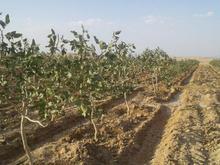 اژانس زمین کشاورزی ودامداری در شیپور-عکس کوچک