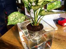 گلدان آکواریوم در شیپور-عکس کوچک