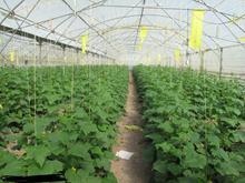 5000 متر  گلخانه در شیپور-عکس کوچک