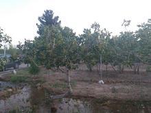باغ کشاورزی 1100متر  در شیپور-عکس کوچک