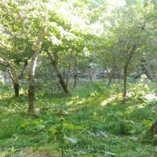 باغ میوه به متراژ ۲۳۰۰ متر و ۱۴۰۰۰ هزار متر در شیپور-عکس کوچک