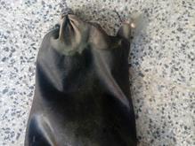 مشک ابی باپوست بزدرجه یک در شیپور-عکس کوچک