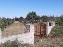 یک قطعه زمین در خرم آباد تنکابن در شیپور-عکس کوچک