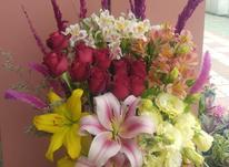 گل فروشی افرا آمل در شیپور-عکس کوچک