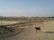 6هکتار زمین کشاورزی  در شیپور-عکس کوچک
