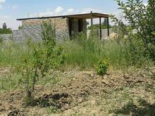 باغچه هلو شلیل بر آسفالت  در شیپور-عکس کوچک