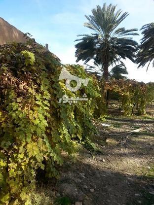 زمین باغی باتخفیف عالی در گروه خرید و فروش املاک در فارس در شیپور-عکس1