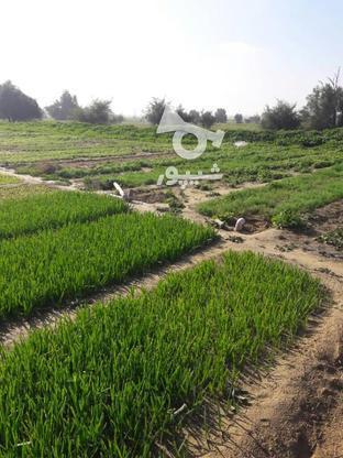 سه هکتار زمین کشاورزی در گروه خرید و فروش املاک در بوشهر در شیپور-عکس1