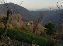 فروش زمین با ویو عالی در شیپور-عکس کوچک