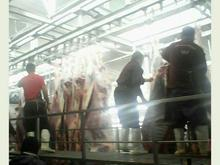 ذبح دام گوسفند و گوساله گلستان رباط کریم اسلامشهر در شیپور-عکس کوچک