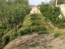 يك قطعه زمين مناسب باغ ويلا در شیپور-عکس کوچک