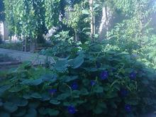 465 متر ویلایی شیک در میدان نیایش در شیپور-عکس کوچک