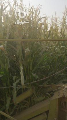 چاپر علوفه ذرت دو ردیفه در گروه خرید و فروش وسایل نقلیه در اصفهان در شیپور-عکس1