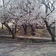 باغ 1000 متری 4 دیواری با سهمیه اب  در شیپور-عکس کوچک