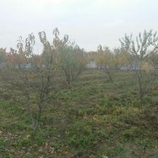 باغچه واقع در گنج آباد در شیپور-عکس کوچک