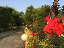 8320 متر باغ تجاری صنعتی گردشگری مازندران شمال آمل در شیپور-عکس کوچک