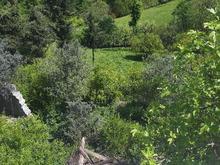 4۴۰۰مترزمین جهت ساخت  وباغ درختان مبوه در شیپور-عکس کوچک