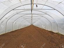 گلخانه اجاره ای 1000 متر  در شیپور-عکس کوچک