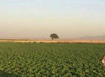 اجاره زمین کشاورزی، صنعتی و پژوهشی علمی  در شیپور-عکس کوچک
