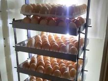 فروش کلیه قطعات دستگاه جوجه کشی (با بدنه یخچال) در شیپور-عکس کوچک