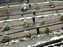 لوله های دریپر دار در طراحی آبیاری قطره ای در شیپور-عکس کوچک
