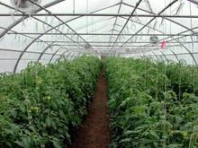 1000 متر گلخانه اجاره ای در منطقه چادگان تیران در شیپور-عکس کوچک