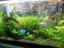 پلنت زیبا با گیاه در شیپور-عکس کوچک