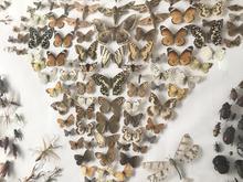 كلكسيون منحصر به فرد از حشرات در شیپور-عکس کوچک