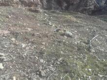 زمین میگون 160 متر در شیپور-عکس کوچک