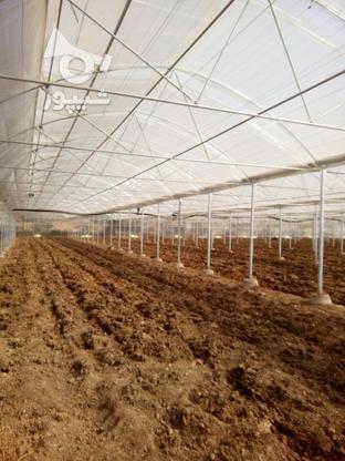 ساخت وسازوفروش واجراگلخانه  در گروه خرید و فروش خدمات و کسب و کار در اصفهان در شیپور-عکس3