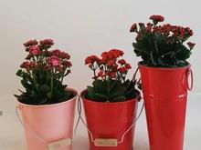 گلدان فلزی  در شیپور-عکس کوچک