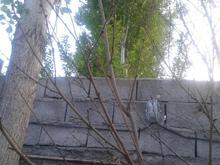 هرس کاری تخصصی وسمپاشی در شیپور-عکس کوچک