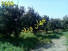 مازندران امل باغ مرکبات به تعداد 10 پلاک در شیپور-عکس کوچک