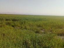 فروش زمین کشاورزی 20000 متر در شیپور-عکس کوچک