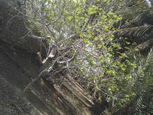 خرید زمین چابهار کمب 250 الی 300 متر  در شیپور-عکس کوچک