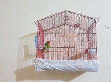طوطی کتوله با قفس بزرگ در شیپور-عکس کوچک