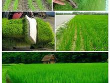 کشاورزی خاک جنگلی برای سینی نشا شالی گلخانه باغچه در شیپور-عکس کوچک