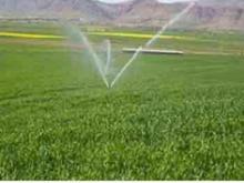 اجاره زمین کشاورزی30000   متری  در شیپور-عکس کوچک